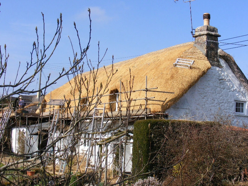 Thatched Cottage in Venton
